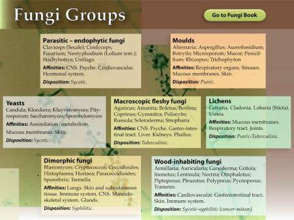 fungi groupsnew.jpg